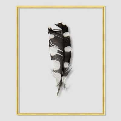 Still Acrylic Wall Art - Feathers - Woodpecker Feather - West Elm