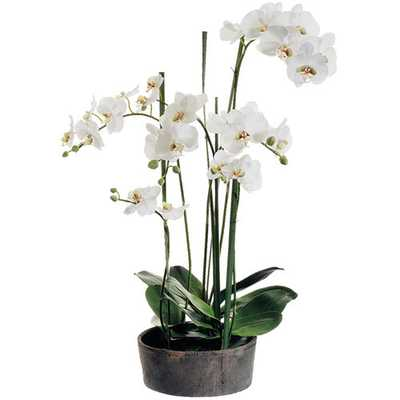 Faux Phalaenopsis Orchids with Clay Pot by House of Hampton - Wayfair