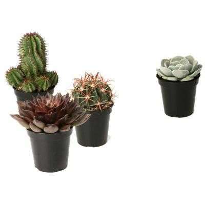 3.5 in. Assorted Cactus and Succulent Plants - Home Depot
