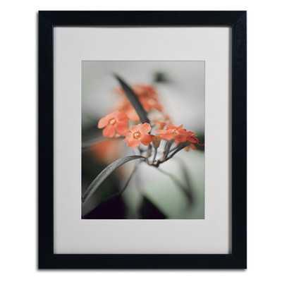 'Soft Grey 3' by Philippe Sainte-Laudy Framed Photographic Print- 20 x 16- Framed - Wayfair