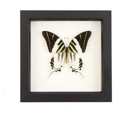 """Framed Giant Swordtail Butterfly Wall Art Display Insect Taxidermy- 6x6""""- Black frame - Etsy"""