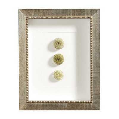 Sea Shell Art - Green Urchin, 17x13 - Ballard Designs