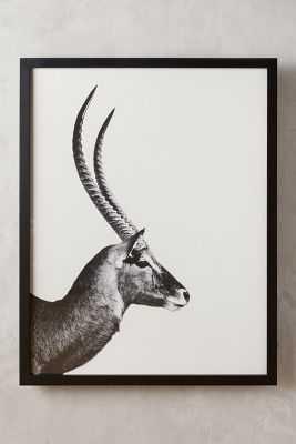 Antelope Sentry Wall Art - 57.5''H, 45.5''W - Framed - Anthropologie
