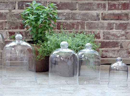 GLASS CLOCHE BELL JAR - Home Decorators