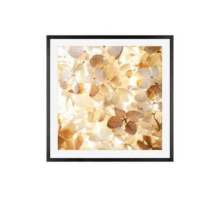 "SOFT LIGHT FRAMED PRINT BY CINDY TAYLOR -25"" x 25""-Framed - Pottery Barn"