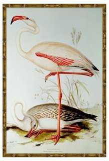 "Flamingo I - 17"" x 25"", natural frame, no mat - One Kings Lane"