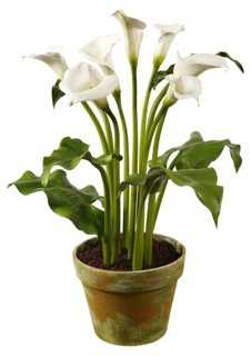 "30"" Calla Lily in Planter, White - One Kings Lane"