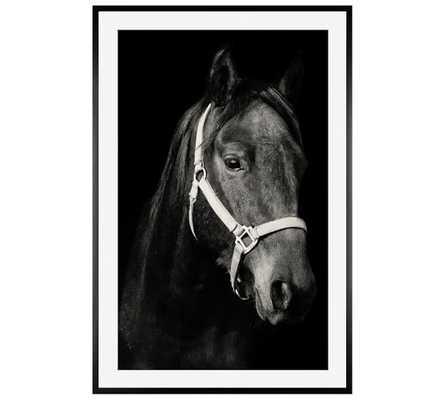 Dark Horse - 28x42, Framed - Pottery Barn