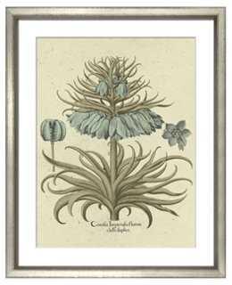Basilius Besler, Botanical I 1613 - One Kings Lane