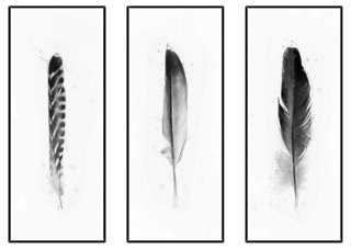 "Black and White Feathers Triptych-49'5""x40'5""-Framed - One Kings Lane"