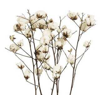 S/5 Cotton Stalks - Dried - One Kings Lane