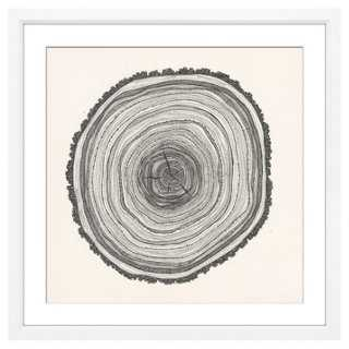 "Tree Slice II - 24"" x 24"" - off-white frame - One Kings Lane"