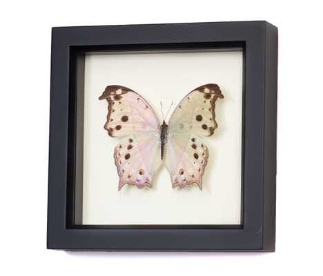 """Real Framed Butterflies Mother of Pearl Butterfly- 6"""" H x 6"""" W x 1 ¼ """" D- Black frame - Etsy"""