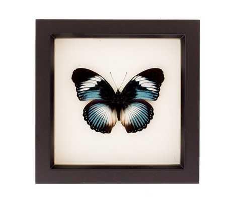 "Blue Diadem Real Framed Butterfly Shadowbox- 6"" H x 6"" W x 1¼ "" D.- Black frame - Etsy"