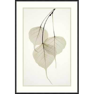 'Bo Tree' by Albert Koetsier Framed Photographic Print - AllModern