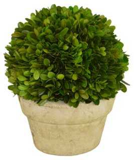 """9"""" Topiary in Planter, Preserved - One Kings Lane"""