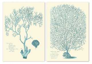 """Flabella Movina Diptych - each, 17"""" x 21.5"""" - Unframed - One Kings Lane"""