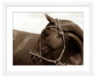 "Alice Gipps, Polo Pony-18"" x 22""-Framed - One Kings Lane"