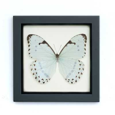"""Real Framed Butterfly Mint Morpho- 6"""" H x 6"""" W x 1 ¼ """" D- Black frame - Etsy"""