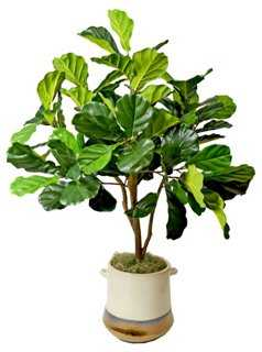 "52"" Fiddle-Leaf Tree in Pot, Faux - One Kings Lane"
