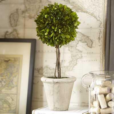 Preserved Boxwood Topiary, Single Ball - Birch Lane