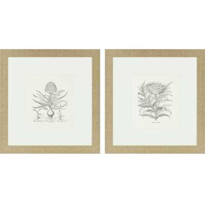 "Flower Impressions Hyacinthus/Cinera 2 Piece Framed Painting Print Set- 27"" H x 26"" W x 1"" D - Wayfair"