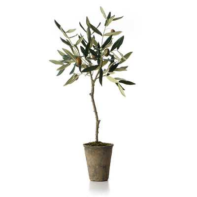 French Market Olive Tree in Pot - Wayfair