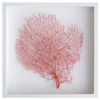 Exotic Sea Fan - One Kings Lane