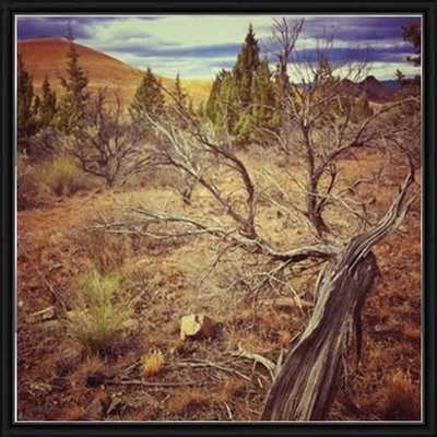 """Flora in the Painted Hills-20""""x20""""-Framed - Photos.com by Getty Images"""