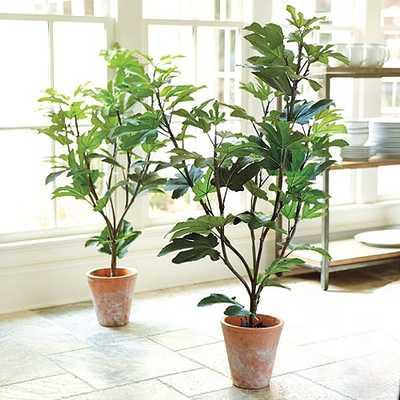 Potted Fig Tree - Ballard Designs
