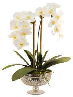 "25"" Phalaenopsis in Footed Bowl, Faux - One Kings Lane"