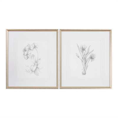 Botanical Sketch Art, Set of 2 - Cove Goods