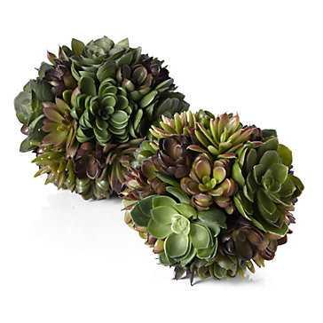 Succulent Ball - Z Gallerie