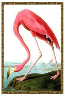 Flamingo II - Framed - One Kings Lane