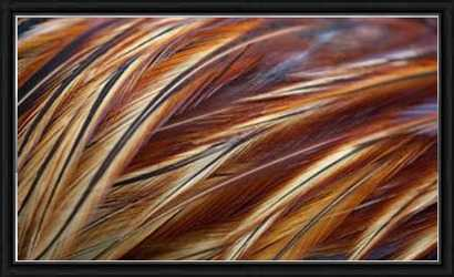 """Feathers close-up on rooster, pattern-22""""x14""""-Framed - Photos.com by Getty Images"""