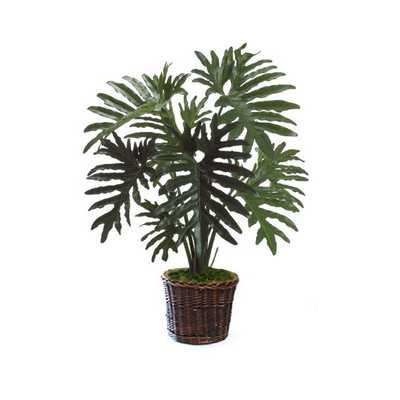 Philodendron Floor Plant in Basket - AllModern