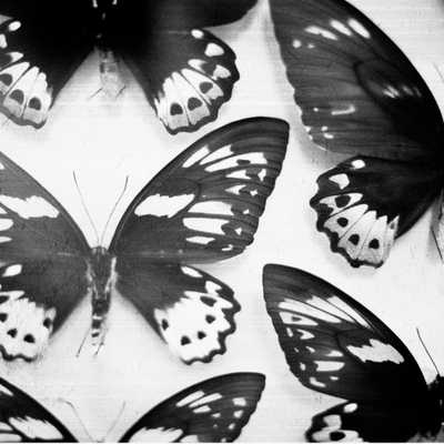 "Black and White Butterflies Canvas Print - 18"" x 18"" - Unframed - Society6"