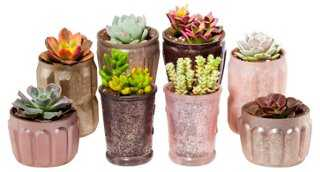 "3-5"" Succulent Arrangement Kit - One Kings Lane"