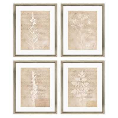 Botanical Giclée Framed (Beige) Graphic Art, Set of 4 - Wayfair