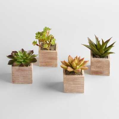 Mini Succulent Pots, Set of 4 - World Market/Cost Plus