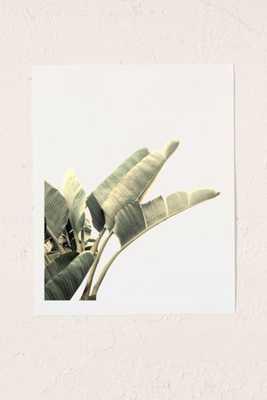 Wilder California Beverly Hills Banana Tree Art Print - 13X19 - Unframed - Urban Outfitters