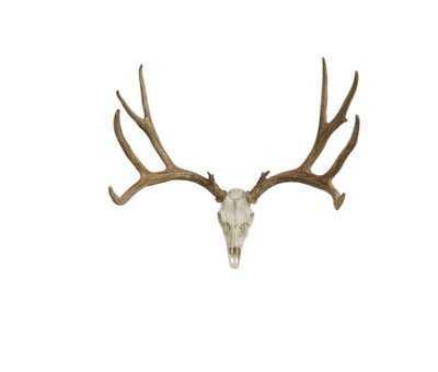 Mule Deer European Wall Décor - Wayfair
