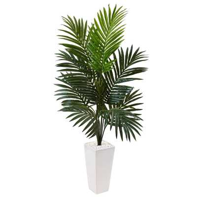 4.5' Kentia Palm Tree in White Tower Planter - Fiddle + Bloom