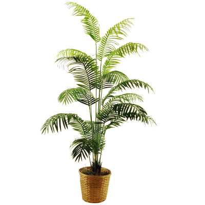 Areca Palm Floor Plant in Basket - Wayfair