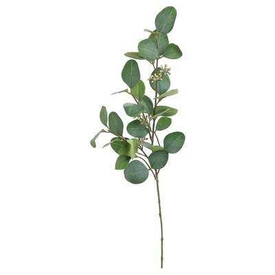 Silver Dollar Eucalyptus Stem - Wayfair