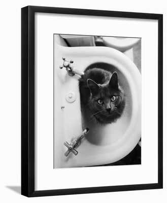 Cat Sitting In Bathroom Sink - art.com