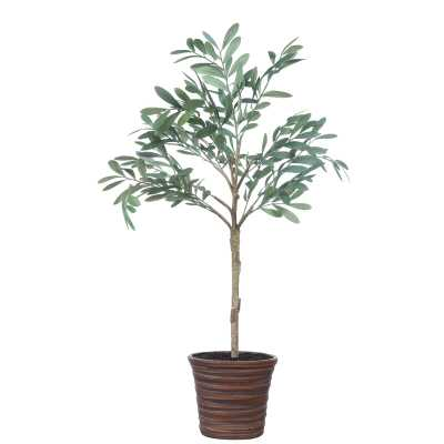 Olive Tree in Pot - Wayfair