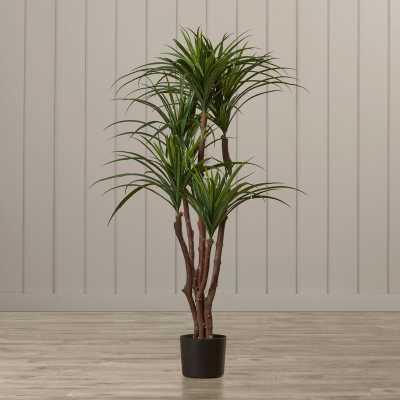 Tropical Yucca Tree in Pot - Wayfair