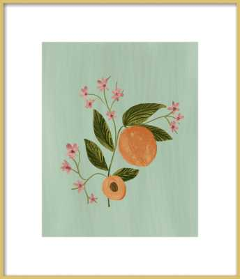 Peach Botanical Illustration - Artfully Walls