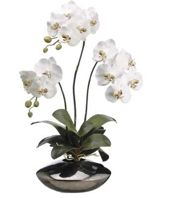 Phalaenopsis Orchid Plant in Ceramic Pot - Wayfair